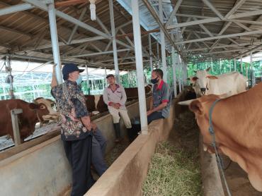 belajar produksi pupuk kandang (1)